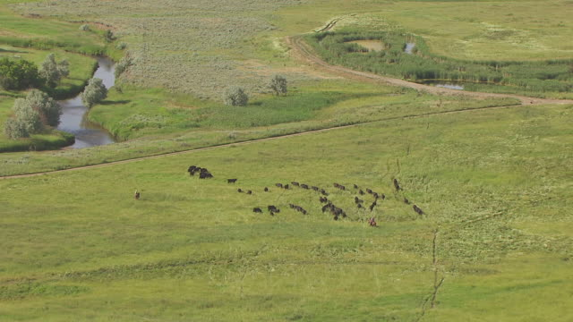 ws aerial ts zi farmer on horse and cows / wyoming, united states - wyoming ranch stock videos & royalty-free footage