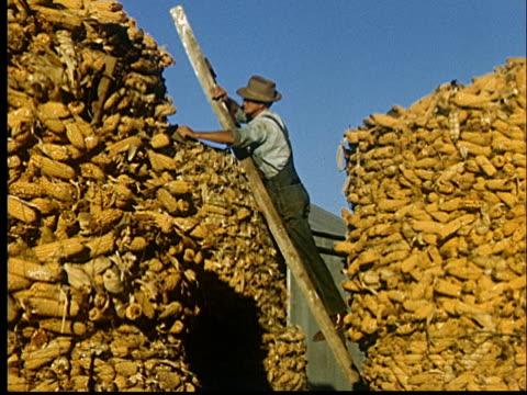 stockvideo's en b-roll-footage met composite, farmer on ladder leaning against giant stack of corn, 1950's, oklahoma, usa - 50 59 jaar