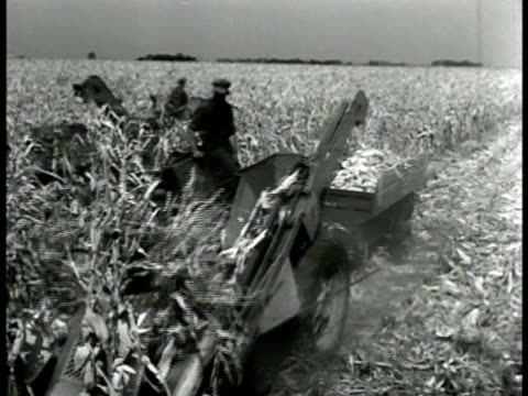 farmer on machine harvesting corn in corn field. machine scoop cutting picking up corn from field. corn dropping into bin on machine. ohio - ranch stock videos & royalty-free footage
