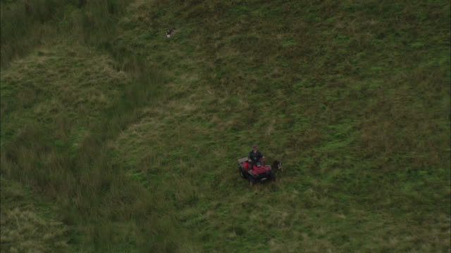 farmer on quad bike as sheepdog follows close by. available in hd. - 2000s style stock videos & royalty-free footage