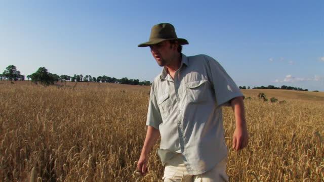 farmer on ripe wheat field - mindre än 10 sekunder bildbanksvideor och videomaterial från bakom kulisserna