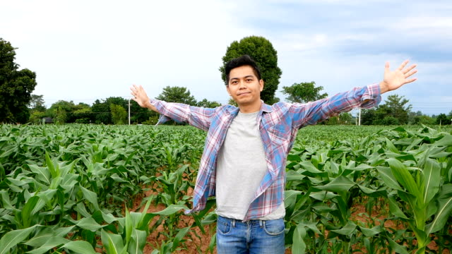 farmer open arms successful in corn field - sample holder stock videos & royalty-free footage