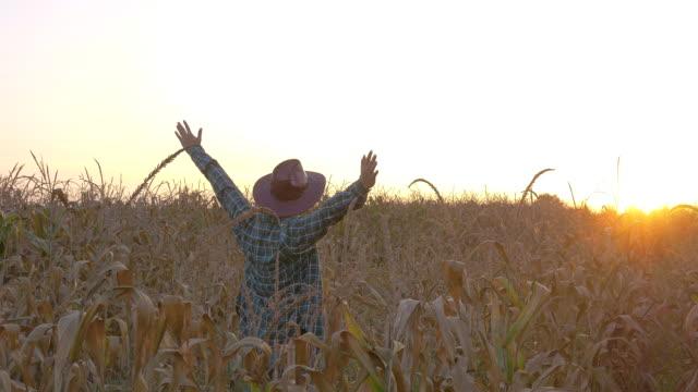 vídeos y material grabado en eventos de stock de brazos abiertos granjero acertados en campo del maíz - contenedor de muestras