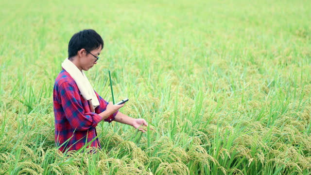farmer or researcher taking pictures of a rice crop with a smart phone - land stock videos & royalty-free footage