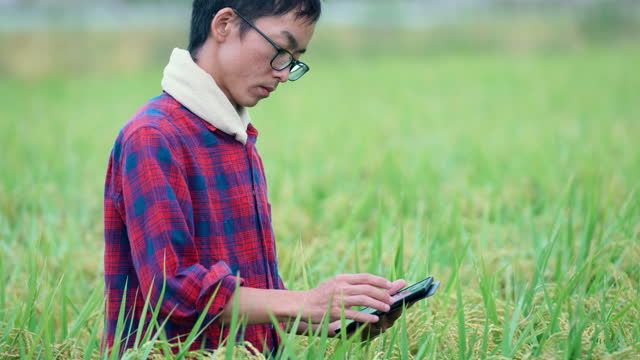farmer or researcher using a tablet computer while examining a rice crop outdoors - satoyama scenery stock videos & royalty-free footage