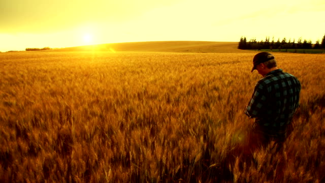 farmer over looking the success of his crops. - field stock videos & royalty-free footage