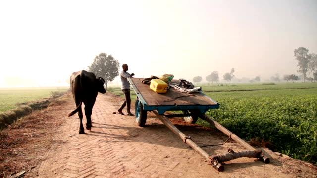 Landwirt Parken Büffel Einkaufswagen in das Feld