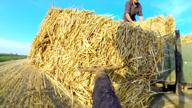pov farmer picking up bales with gardening fork - garden fork stock videos & royalty-free footage