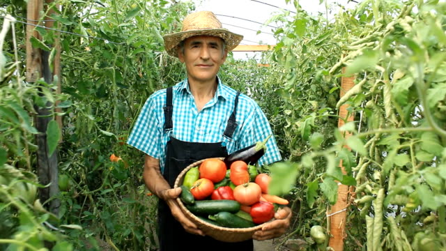 stockvideo's en b-roll-footage met farmer picking vegetables - mand