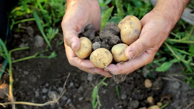 農家野菜狩り - harvesting点の映像素材/bロール