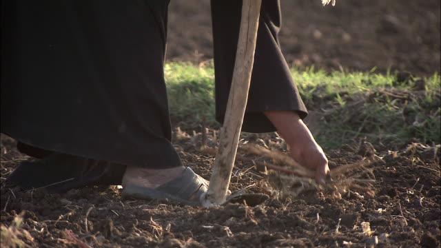 a farmer picks twigs from a field. - weeding stock videos & royalty-free footage
