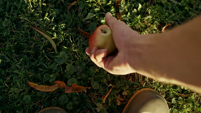 pov slo mo farmer picks up an apple that has fallen to the ground - picking up stock videos & royalty-free footage