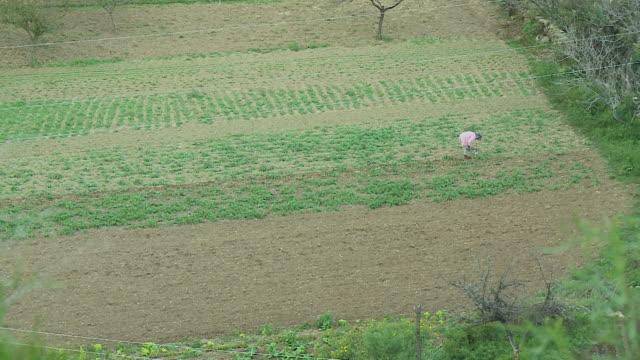 a farmer ploughing a farmland - afghanistan stock videos & royalty-free footage