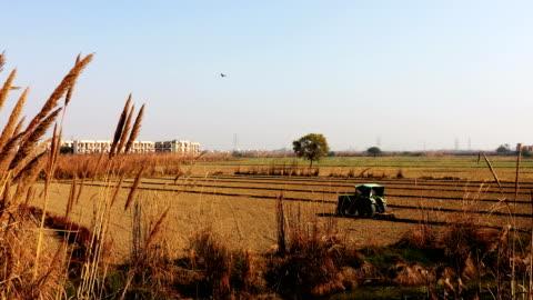 vídeos y material grabado en eventos de stock de campo arado - campo arado