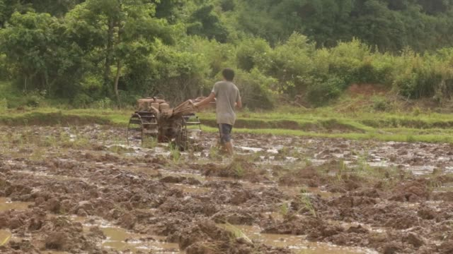 a farmer plows a rice paddy in tong village bokeo province laos on sunday july 30 2017 - paddy field stock videos & royalty-free footage
