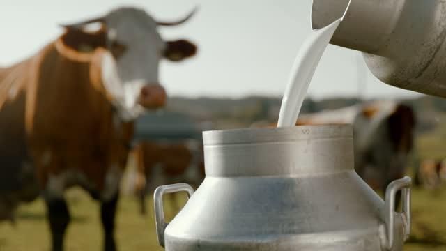 牧草地で搾乳牛の後に樽にミルクを注ぐslo mo農家 - 乳搾り点の映像素材/bロール