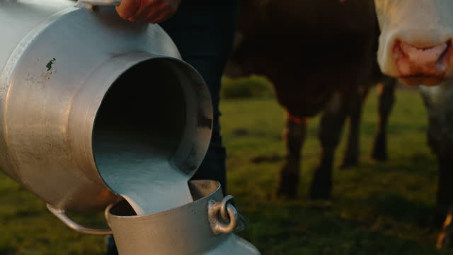 slo mo farmer pours milk from one barrel to another - female animal stock videos & royalty-free footage