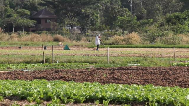Farmer Erde vorbereiten für plantation, mit Stroh.
