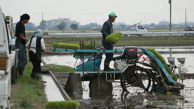a farmer prepares rice seedlings to plant in a paddy field in saitama japan on sunday may 25 a farmer places rice seedlings on a rice transplanter in... - asian style conical hat stock videos & royalty-free footage
