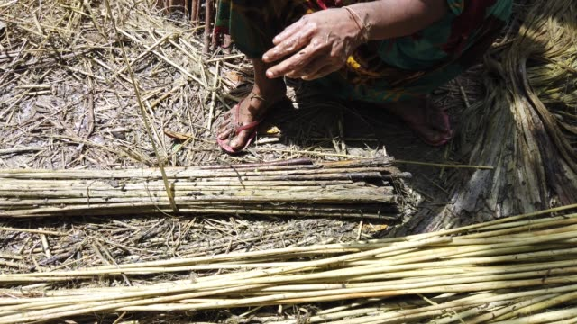 """farmer processing jute fibers from plants in bangladesh. jute in bangladesh is called """"the golden fiber"""" is used for exporting jute... - 荒い麻布点の映像素材/bロール"""