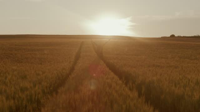 slo moファーマーは、日没時に熟した小麦のフィールドに立っている間、空気に腕を上げます - 穀物 ライムギ点の映像素材/bロール