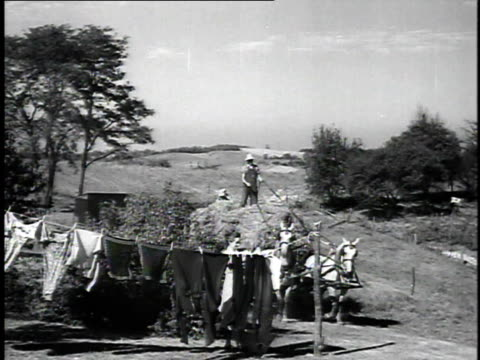 1923 ws farmer returning to farm buildings with load of hay on horse-drawn wagon / united states - 1923 stock videos & royalty-free footage