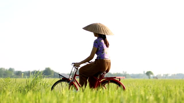farmer riding a bicycle in the rice field. - thailand stock videos & royalty-free footage