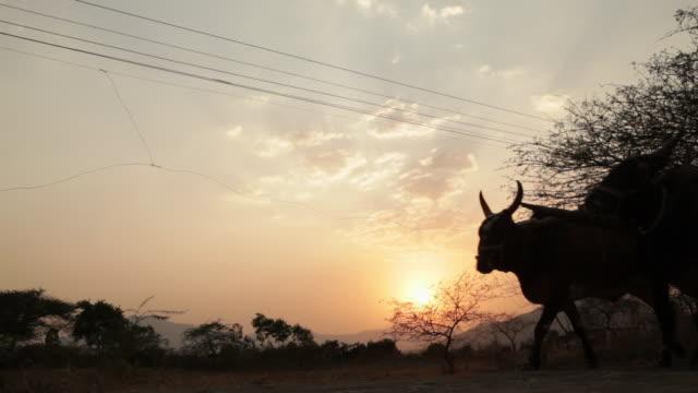 farmer riding an ox cart - ox cart stock videos & royalty-free footage