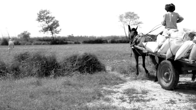 Farmer riding cart to the field