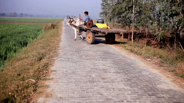 farmer riding ox cart - ox cart stock videos & royalty-free footage