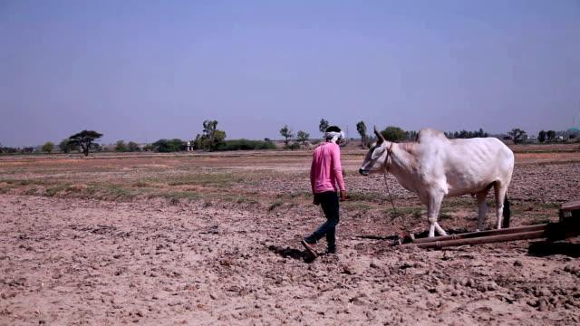stockvideo's en b-roll-footage met boer paardrijden ox kar - sorgo