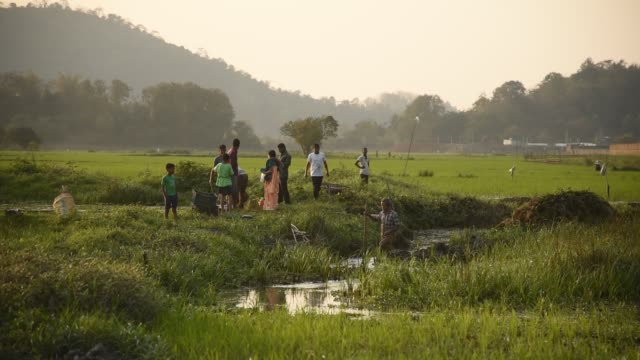 farmer scatters fertilizer in a newly planted paddy field - village stock videos & royalty-free footage