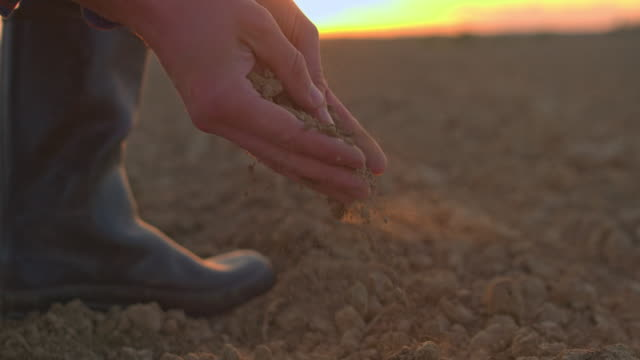 vídeos de stock e filmes b-roll de cu farmer scooping and examining dirt in rural,plowed field at sunset - solo