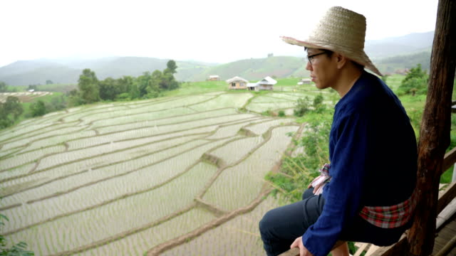 farmer showing off his work on the rice paddy - mack2happy stock videos and b-roll footage