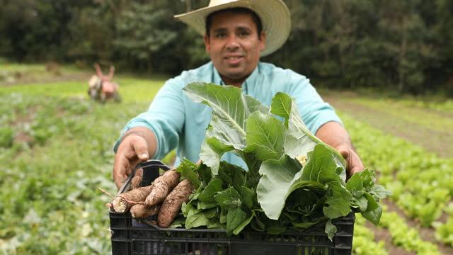 vídeos de stock, filmes e b-roll de fazendeiro mostrando as plantações em uma cesta - espontânea