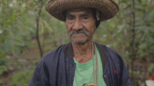 a farmer showing us the fresh coffee seeds - farm worker stock videos & royalty-free footage