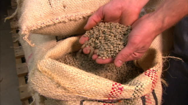 a farmer sifts raw coffee beans from a sack through his hands. - sack stock videos & royalty-free footage