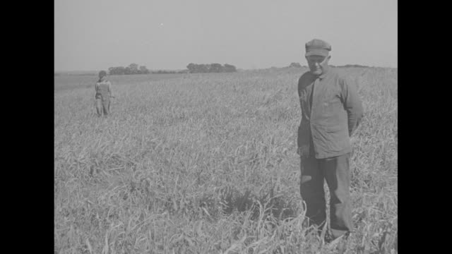 farmer simon stuckey and son standing in field stuckey says oats for cattle and crop ankle high but should be shoulder high / cu stuckey says not... - dust bowl stock videos and b-roll footage