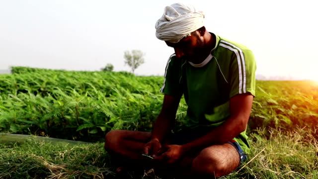 vídeos y material grabado en eventos de stock de campesino sentado en el campo y mediante teléfono móvil - aldea