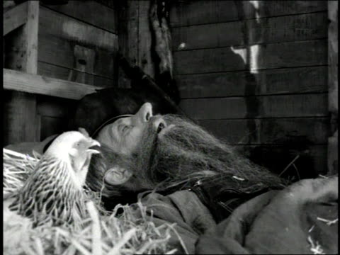 1947 ma farmer sleeping next to a chicken in a barn and blowing a feather when he snores / united states - snoring stock videos and b-roll footage