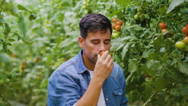 vidéos et rushes de fermier sentant les tomates biologiques fraîches - personnes belles