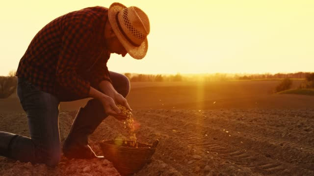 farmer sowing and wind spreading corn kernels in sunny,idyllic plowed field at sunset,slow motion - one mid adult man only stock videos & royalty-free footage