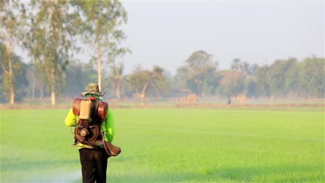 vídeos de stock, filmes e b-roll de agricultor jogando pesticidas na fazenda de arroz - pulverizando
