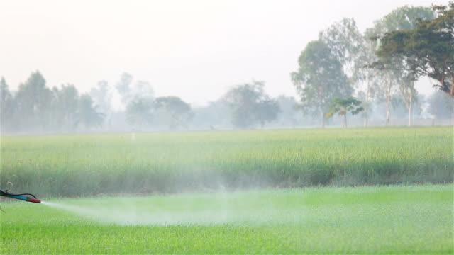 vídeos de stock e filmes b-roll de agricultor de pulverização de pesticidas arroz farm - inseticida