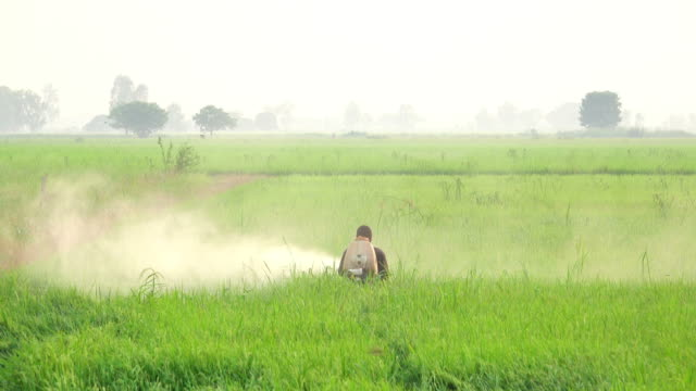 farmer spraying pesticide in rice field - spraying stock videos and b-roll footage