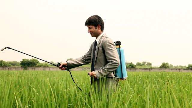 vídeos de stock e filmes b-roll de farmer spraying pesticides in the farm, haryana, india - inseticida