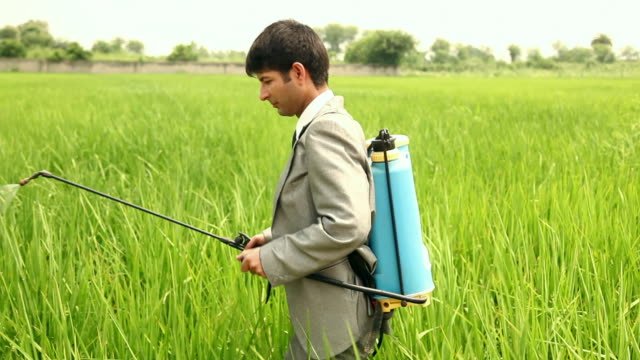 farmer spraying pesticides in the farm, haryana, india - insecticide stock videos & royalty-free footage