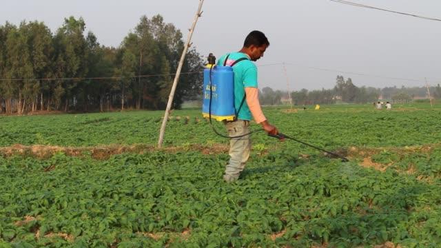 farmer spraying pesticides - 殺虫剤点の映像素材/bロール