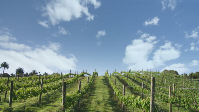 t/l, ws, farmer spraying vineyard, auckland, new zealand - vineyard stock videos & royalty-free footage