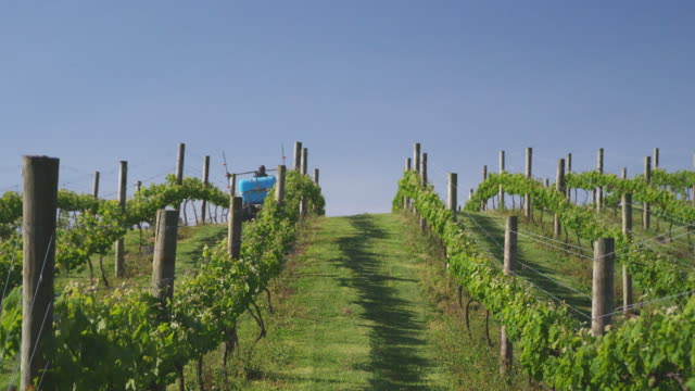 T/L, MS, Farmer spraying vineyard, Auckland, New Zealand